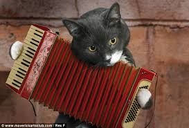 accordian cat